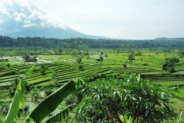Wieso eine Auszeit auf Bali dein Leben für immer verändern wird