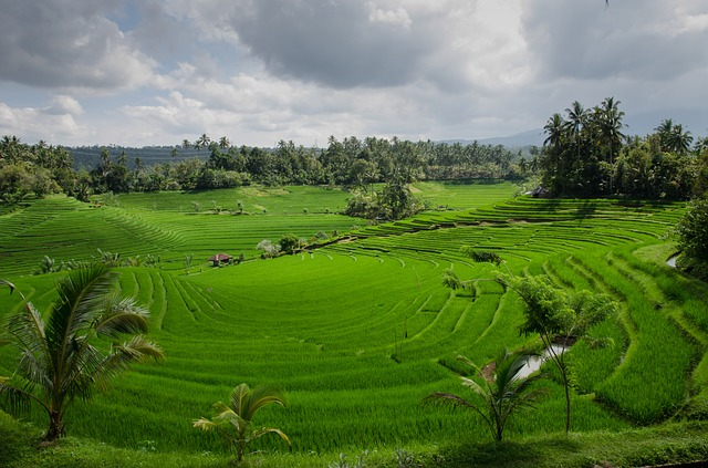 Auszeit auf Bali Landschaft